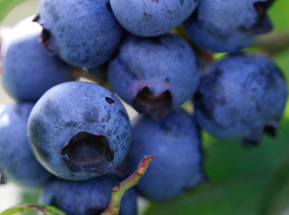 image: A photograph of blueberries.
